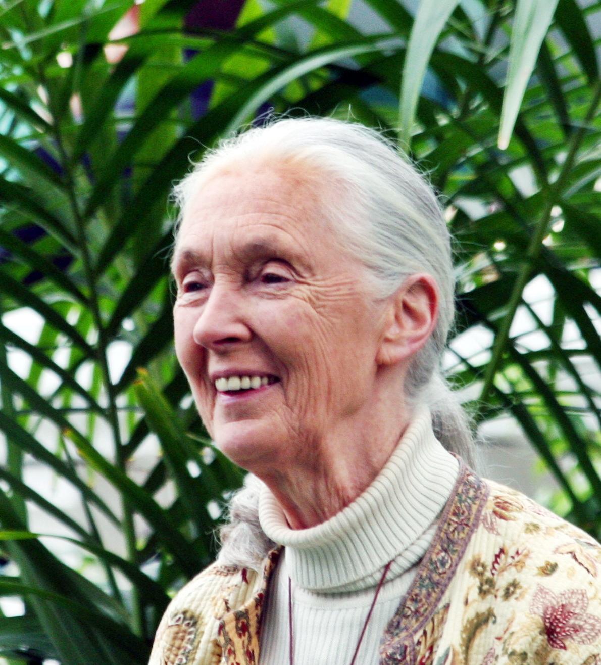 L'immense primatologue Jane Goodall.