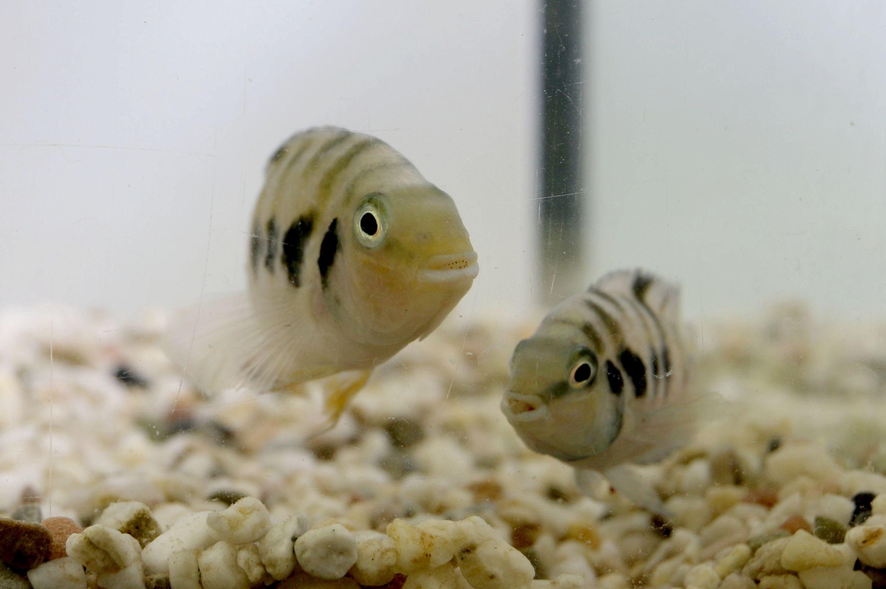 a pair in the lab 02 - chloe laubu 20156