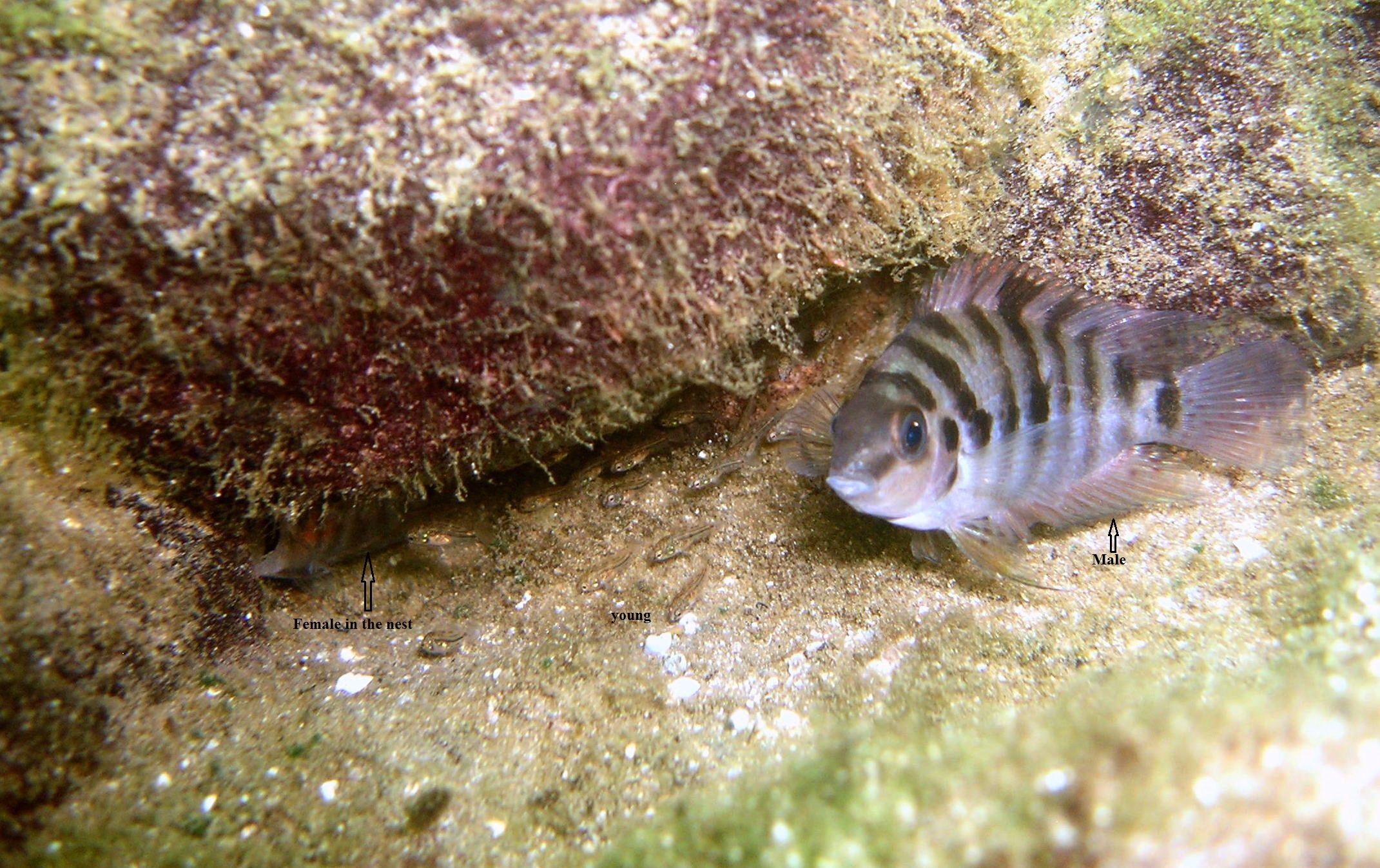 in natural condition 02 (lake Xiloa, Nicaragua) - sebastien motreuil01