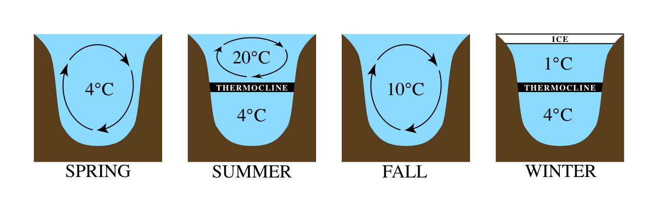 Stratification thermique dans les lacs dimictiques.