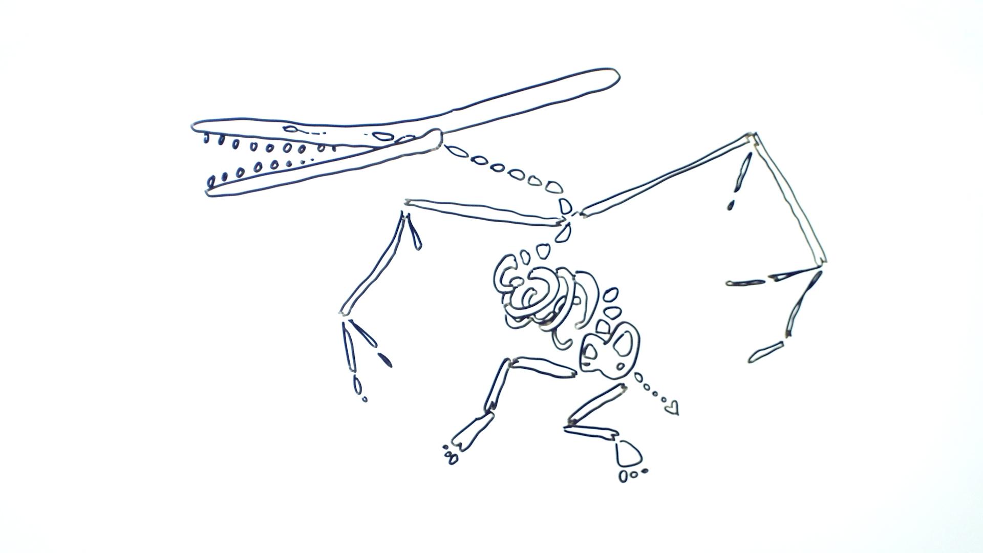 Fossile de ptérosaure (vue d'artiste pas doué en anatomie)