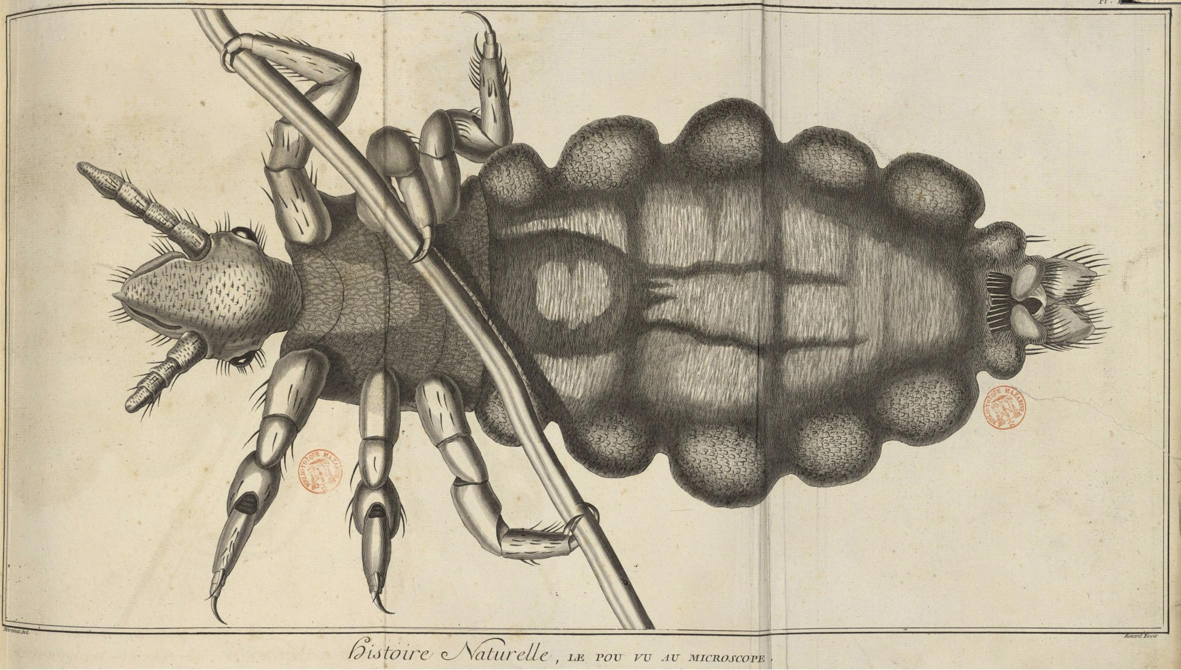 Un pou vu au microscope, tiré de L'Encyclopédie de Diderot-d'Alembert.